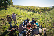 .A group of northern Willamette Valley winemakers and viticulturists gather at Arilyn vineyard for biodynamic preparation 500.  Cows horns are filled with cow dung, buried in the soil for the winter months when life breathes into the soil which are absorbed into the dun thought the receptive nature of the horn.  In the spring, the cow horns are dug up, manure will have transformed into dark humus and be sweet smelling, ready to be applied via a spray to the vineyard to increase soil fertility.