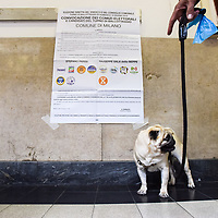 Milano, Italy - 19-06-2016: A dog stands in front of an electoral poster during the run-off elections for Mayor of Milan
