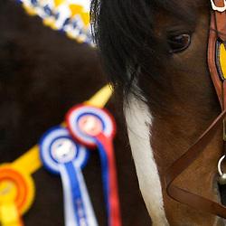 SHS Spring Show 2013 Premium Stallions