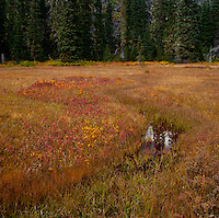 "A stream once flowed here now only a meandering spring displaying autumn color the Takh Takh Meadow Gifford Pinchot National Forest in Washington state's Cascade Mountain Range near Mount Adams. (""Takh Takh"" is a Taidnapam/Yakama word meaning ""small Prairie"") in the edge of the meadow, a lodgepole pine forest hides an ancient volcanic flow - large black rough bolders rising abruptly 50-100 feet above the surrounding land."