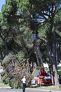 20180619 - Albero Caduto su cartello autobus Vigili del fuoco