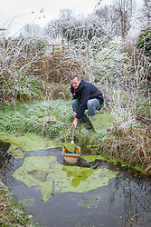 Taking advantage of the ice by removing chunks of frozen algae from a frozen pond