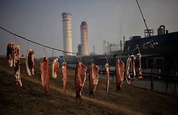 A view of dried meats hung by villagers just outside the Jinhuarun Chemical Industry plant in a chemical industry park in Zekou Town, Qianjiang City of Hubei Province, China 14 January 2013. While the heavy smog in Beijing and much of northern China in recent days have caused alarm among residents and renewed scrutiny on the pollution woes of the country, villagers in a small town of Hubei Province have been grappling with severe air, water and noise pollution on a daily basis over the past two years. China's Xinhua news reported 04 January 2013 that more than 60 cancer deaths in various villages of Zekou Town has been caused by the heavy pollution from the chemical industry park nearby. About 20 or more chemical plants built around the villages of Dongtan, Xiangnan, Zhoutan, Sunguai, Qingnian and others over the past two years has created huge increases in noise, air and water pollution. Many villagers complained of intensifying respiratory, heart, skin and circulatory illnesses caused by the pollution and a large spike in cancer diagnoses and deaths since the factories were built. .