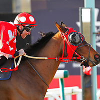 Putin and Paddy Aspell winning the 12.50 race