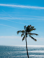 Palm Tree, Ocean and Blue Sky