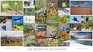 "Geared towards native North Americans, this 36-photo collage depicts the bounty of the plant and animal world with landscapes, wildflowers, and wildlife from Canada and Alaska. (42.1""x23.5"")"