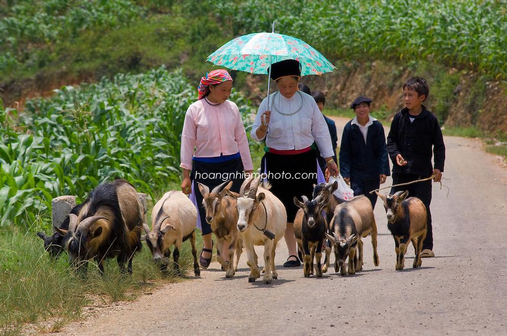Vietnam Images-People-Market-Ha Giang hoàng thế nhiệm