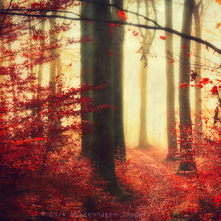 Dreamy autumnal forest scenery - texturized photograph