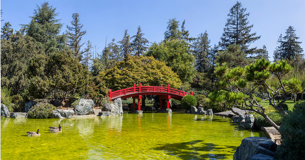 Japanese Bridge and Pond. (19676 x 10345 pixels)