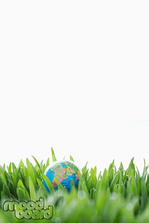 Small Globe in Grass