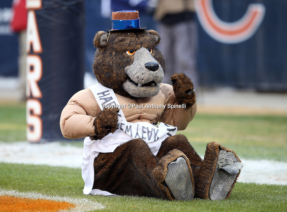 The Chicago Bears mascot wears a New Year's costume as he drags his behind on the end zone grass during the Chicago Bears NFL week 17 regular season football game against the Detroit Lions on Sunday, Jan. 3, 2016 in Chicago. The Lions won the game 24-20. (©Paul Anthony Spinelli)
