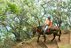 Hawaii: Molokai, the Mule Ride from the cliff tops down 1,600 feet to the leper colony at Kalaupapa. Model released..Photo himolo133-71830.Photo copyright Lee Foster, www.fostertravel.com, lee@fostertravel.com, 510-549-2202