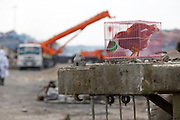 TIANJIN, CHINA - AUGUST 24: (CHINA OUT) <br /> <br /> Chemical-defence Soldiers Detect Toxic Substance<br /> <br /> A chicken in the cage is put at blasts scene to detect whether lives could be existed here in the future in Tianjin Binhai explosion site on August on August 24, 2015 in Tianjin, China. The death toll from the Tianjin warehouse explosions two weeks ago has risen to 139, and 34 others remain missing, rescue authorities said on Wednesday. <br /> ©Exclusivepix Media