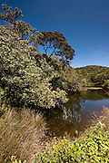 The Arrenga pool. A popular birding spot. Horton Plains National Park.  It lies at a height of more than 2,000 m in the central highlands This is a key wildlife area. Species found here include Leopard, Sambar and the endemic Purple-faced Langur. All highland endemic birds are found here, including Dull-blue Flycatcher, Sri Lanka White-eye, Sri Lanka Wood Pigeon, and Sri Lanka Bush Warbler. Yellow-eared Bulbul and Black-throated Munia are widespread throughout the highlands.The park also has a well-visited tourist attraction at World's End, a sheer precipice with a 1,050 m drop. The return walk passes the scenic Baker Falls.
