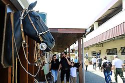 Artigos de Luxo da 38ª Expointer, que ocorrerá entre 29 de agosto e 06 de setembro de 2015 no Parque de Exposições Assis Brasil, em Esteio. FOTO: André Feltes/ Agência Preview