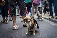A dog named Isis wears traditional Bretagne clothing at the Festival de Cornouaille on Sunday, July 24, 2016 in Quimper, France.