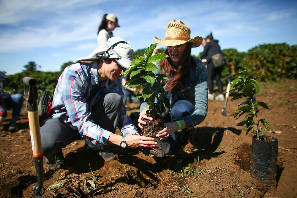 Partners plant trees during the 2016 Starbucks Origin Experience for Partners. Photographed in January 2016. (Joshua Trujillo, Starbucks)<br /> <br /> ***model released***