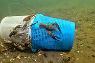 Crayfish Traps, Underwater