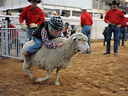 Child Sheep Racing<br /> <br /> Mutton busting is an event held at rodeos similar to bull riding or bronc riding, in which children ride or race sheep<br /> In the event, a sheep is held still, either in a small chute or by an adult handler while a child is placed on top in a riding position. Once the child is seated atop the sheep, the sheep is released and usually starts to run in an attempt to get the child off. Often small prizes or ribbons are given out to the children who can stay on the longest. There are no set rules for mutton busting,<br /> The vast majority of children participating in the event fall off in less than 8 seconds. Age, height and weight restrictions on participants generally prevent injuries to the sheep, and implements such as spurs are banned from use. In most cases, children are required to wear helmets and parents are often asked to sign waivers to protect the rodeo from legal action in that event.<br /> <br /> Photo shows: Amarillo, Texas, USA - 5-year-old Landon Bickerstaff tries mutton bustin' at the Tri-State Fair rodeo in Amarillo, Texas.<br /> ©Exclusivepix