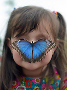 "© Licensed to London News Pictures. 25/03/2013. London, UK. Stella Ferruzola aged 3 looks at butterflies that have settled on his face. Children play with butterflies at the Natural History Museum's new exhibition ""Sensational Butterflies"" which runs from 29th March to 15th September 2013. The exhibition features over 500 tropical butterflies and a chance to watch butterflies emerge from chrysalises trough a hatchery window. Photo credit : Stephen Simpson/LNP"