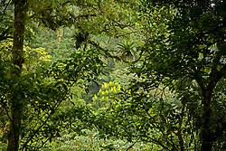 La Fortuna, Alajuela:  Rainforest exploration at the Hanging Bridges.