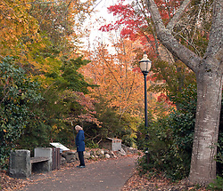 Early morning walker in blue coat stops to read an information board amid intense fall color, Lithia Park, Ashland, Oregon.
