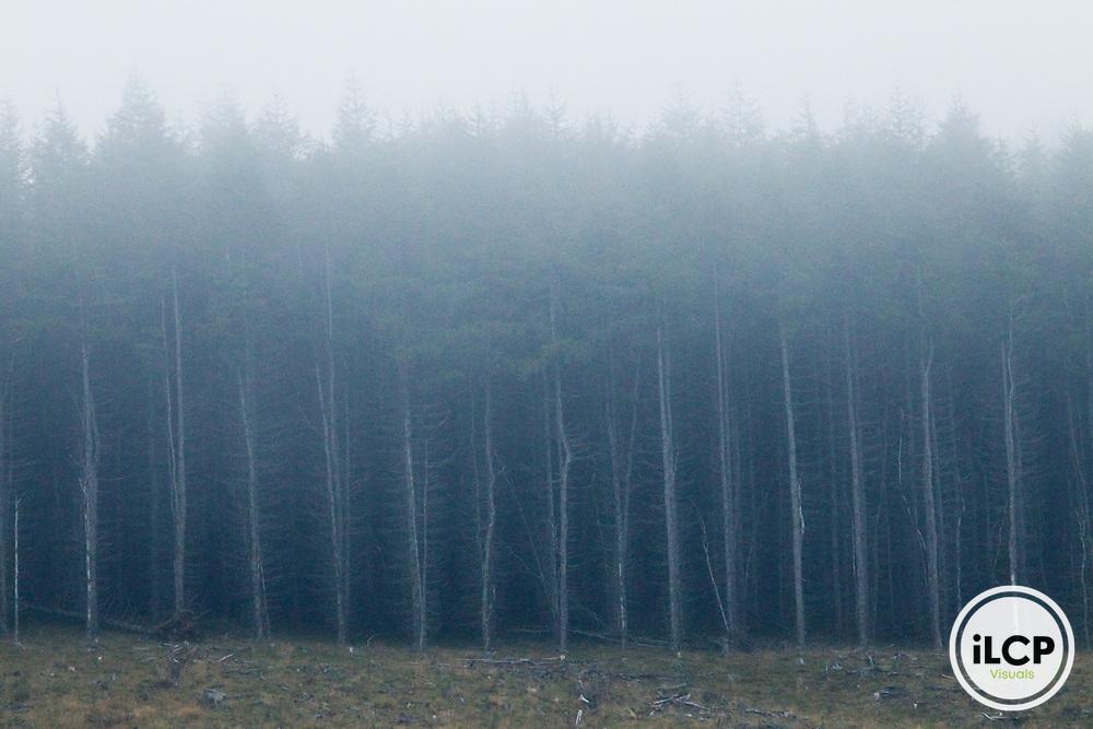Pine (Pinus sp) forest, Glen Isla, Scotland, United Kingdom