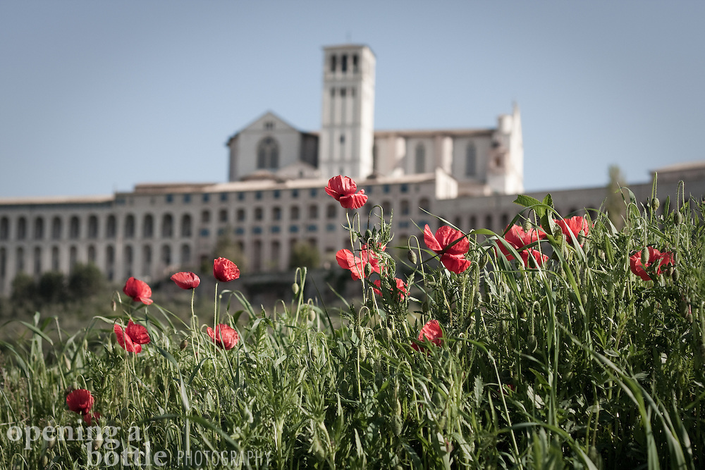 Red poppies bloom in the foreground with the Basilica di San Francesco (Church of St. Francis) rising in the distance. Assisi, Umbria, Italy. Full color image also available upon request.