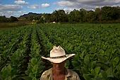 Cuba, Tobacco Culture