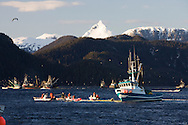 Commercial fishing seiners work to bring in nets full of herring during the 2007 Sitka Herring Sac Roe fishery.