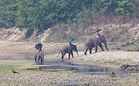 Nepali Mahouts riding their elephants next to a river in Bardiya National Park, Nepal