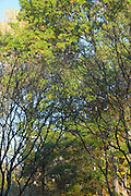 landscape photography, green leaf trees, summer foliage