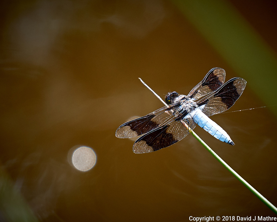 Dragonfly. Image taken with a Leica CL camera and 55-135 mm telephoto zoom lens.