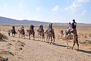 Israel, Negev Desert, Mamshit the Nabataean city of Memphis, re-enactment on the life in the Nabatean period. Tourists ride on a camel convoy following the Incense Road