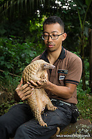 A captive Sunda pangolin (Manis javanica) held by zookeeper Ade Kurniawan (model released) at  Night Safari, Singapore. © 2016 Jak Wonderly / wildwondersofchina.com