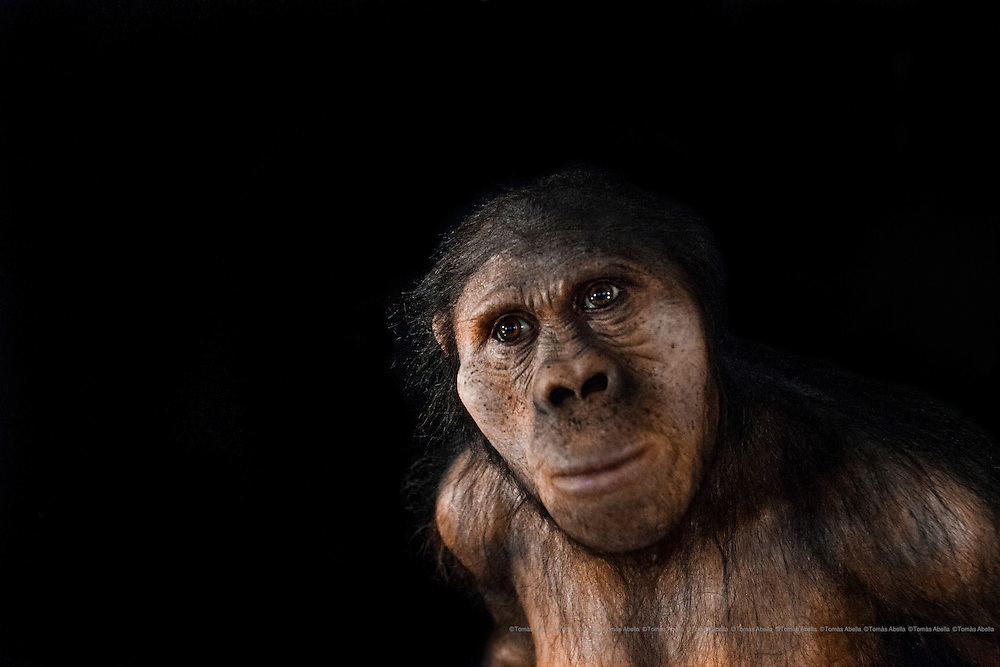 Austrolopithecus africanus. Museo de la Evolución Humana (MEH). Burgos. Spain.