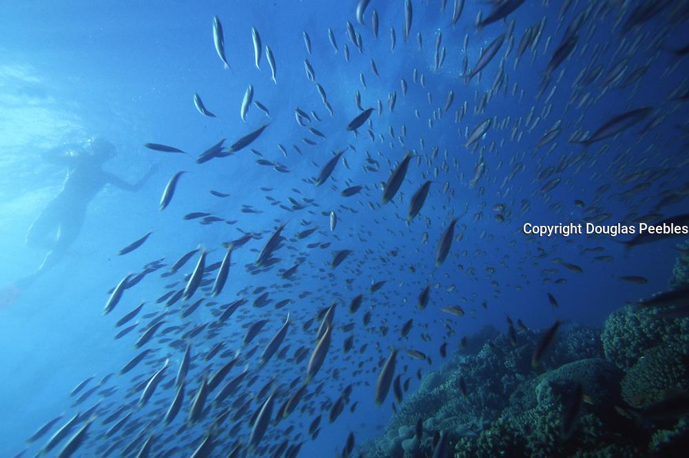 Snorkeling, Nananu-I-Ra island, Fiji<br />