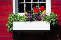 Window box, Boothbay, Maine, USA