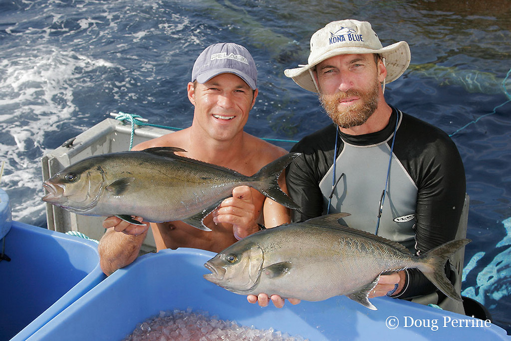 Kona Blue Water Farms co-owner Neil Sims and assistant farm manager Kydd Pollock hold fresh live Kona kampachi, Seriola rivoliana, also known as Hawaiian yellowtail, kahala, or almaco jack, just harvested from the aquaculture pen behind them, Kona Coast, Hawaii Island ( the Big Island ), Hawaiian Islands, USA ( Central Pacific Ocean )