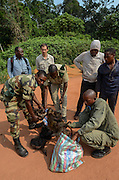 Bushmeat inspection & monkey<br /> Yengo Eco Guard control point<br /> Odzala - Kokoua National Park<br /> Republic of Congo (Congo - Brazzaville)<br /> AFRICA