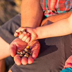 Hands full of shells on East Gosling Island in Casco Bay, Harpswell, Maine.