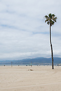 Photo Santa Monica beach landscape wall art. Palm tree, ocean, sand mountains in the distance. Southern California beach landscape. Matted print, limited edition. Fine art photography print.