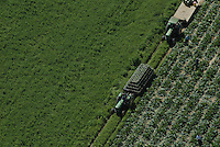 Aerial view of vegetable farm