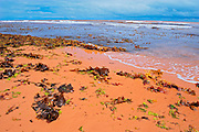 Seaweed, grass and rocks on red sand along the beach of the Gulf of St. Lawrence<br /> Tignish Shore<br /> Prince Edward Island<br /> Canada