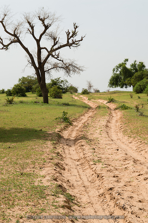 A view of a tree and sandy track in the Zinder Region of Niger on 25 July 2013. Villages are remote, and separated by miles of sinuous tracks that frequently all but vanish.
