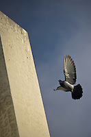A pigeon lands on the bridge at Southland dog Park