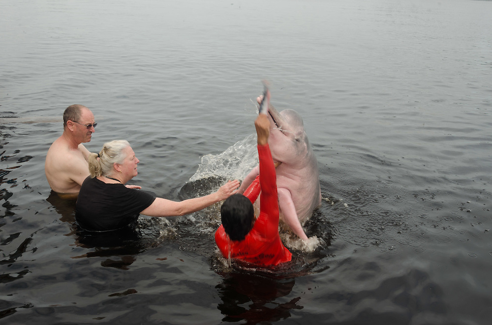 Interacion with Amazon river dolphin (Inia geoffrensis), known in the region as boto-vermelho.