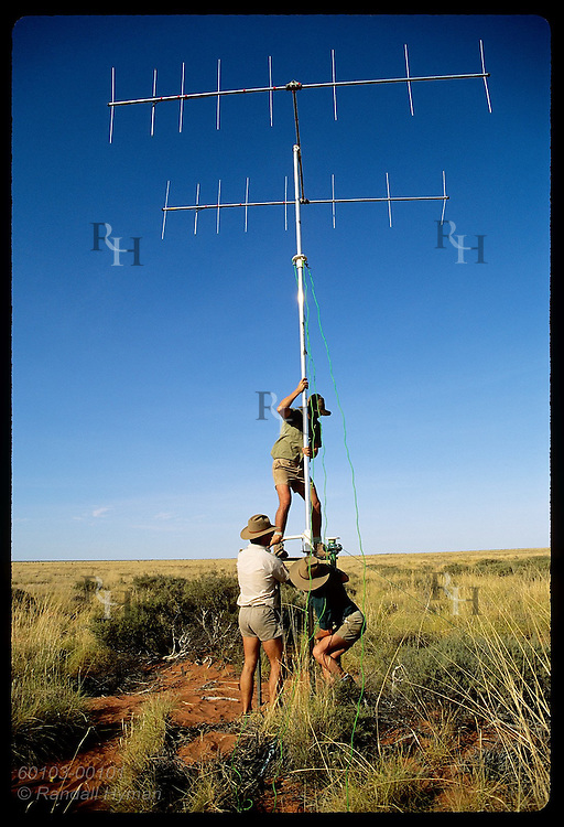 Men hoist antenna to track radio-collared rufous hare-wallabies, or malas, in the Tanami Desert. Australia