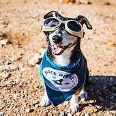 Space dog Spiff