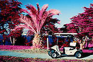 Golf cart and palm tree, Lincoln golf course, San Francisco..Shot with color infra red film